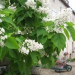 La maison d'hôtes et la cour fleurie